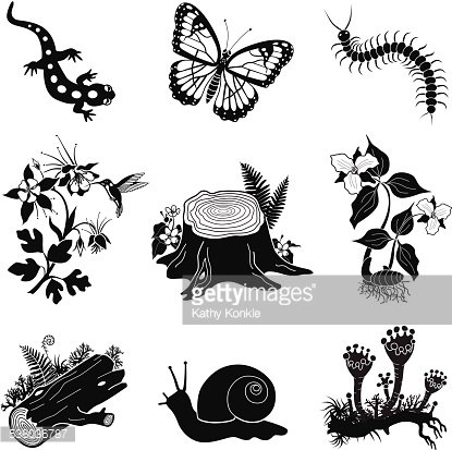 American forest clipart clip art black and white download North American Forest Icon Set IN Black and White premium clipart ... clip art black and white download