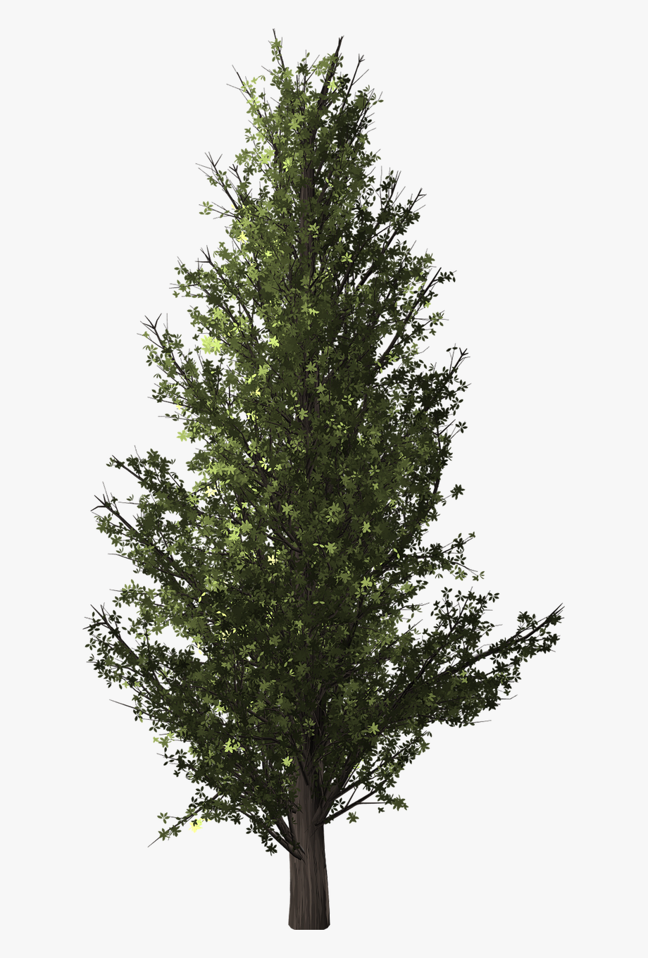 American forest clipart clip art freeuse Forest, Tree, Poplar, Transparent, Isolated - Forest Tree ... clip art freeuse