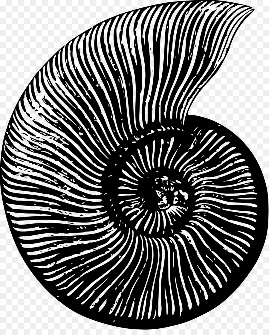 Ammonite clipart graphic free Black Circle png download - 1957*2400 - Free Transparent Ammonites ... graphic free