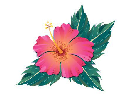 Ampola flower clipart vector freeuse Hibiscus flower/ flor amapola | Tattoo Ideas | Hibiscus flower ... vector freeuse