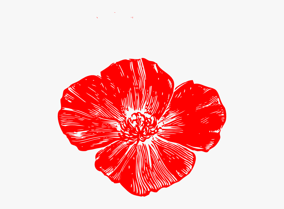 Ampola flower clipart picture transparent stock Red Poppy Flower Clipart - Peach Flower Clip Art #988759 - Free ... picture transparent stock
