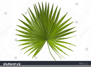 Anahaw clipart vector transparent library Anahaw Leaf Clipart | Free Images at Clker.com - vector clip art ... vector transparent library