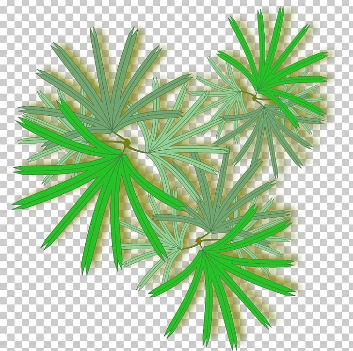 Anahaw clipart graphic free Rhapis Excelsa Arecaceae PNG, Clipart, Anahaw, Aquarium Decor ... graphic free
