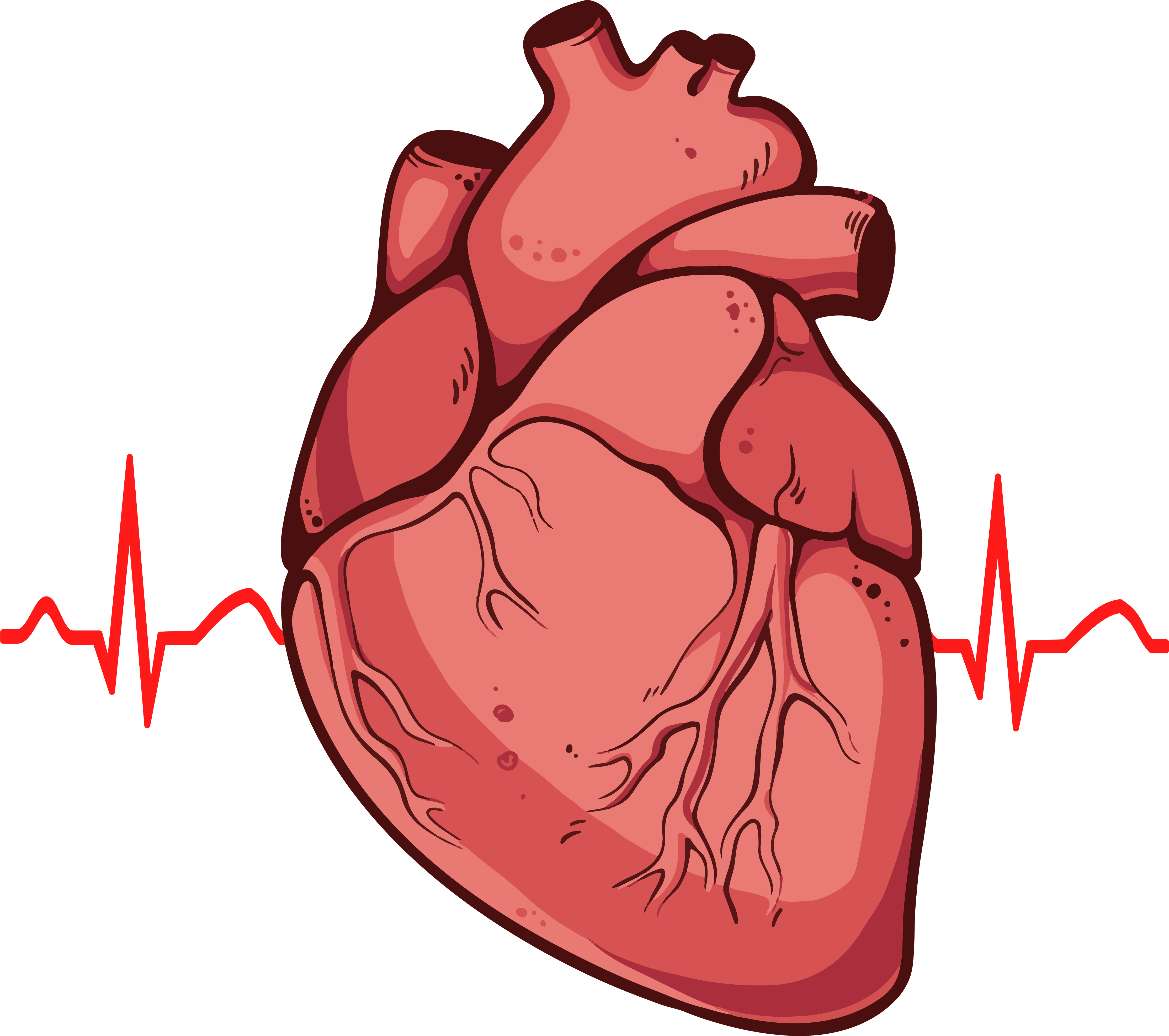 Heart anatomy clipart image royalty free stock 28+ Collection of Human Heart Clipart Png | High quality, free ... image royalty free stock
