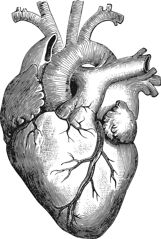 Human heart black and white clipart jpg freeuse Anatomical Heart by gustavorezende - Image from a Vintage Science ... jpg freeuse