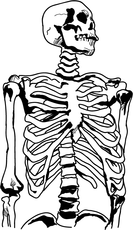 Anatomy clipart black and white vector free download Anatomy Clipart - Clip Art Library vector free download