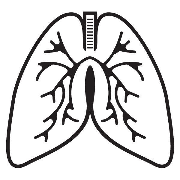 Lungs clipart