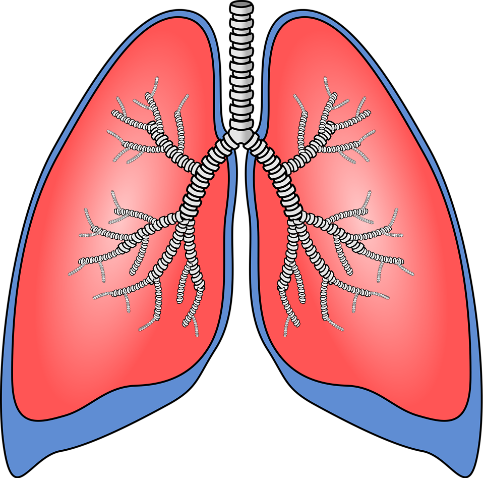 Clipart lung png black and white Lung clipart clipart images gallery for free download   MyReal clip ... png black and white