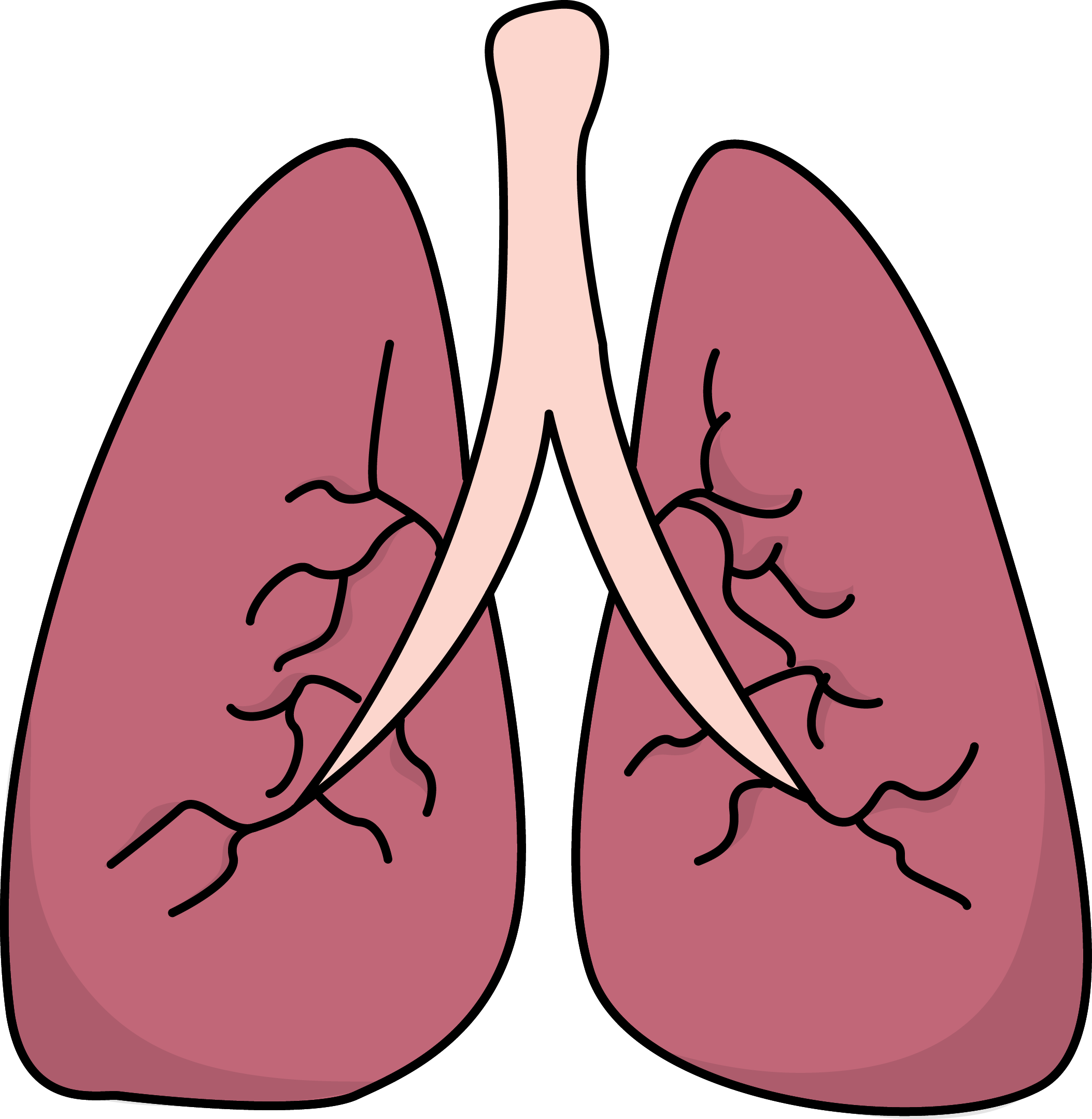 Healthy lungs clipart clip art download Free Small Lungs Cliparts, Download Free Clip Art, Free Clip Art on ... clip art download