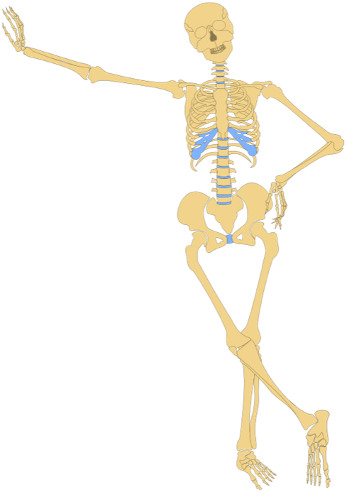 Anatomy clipart images picture library download Anatomy Clipart picture library download