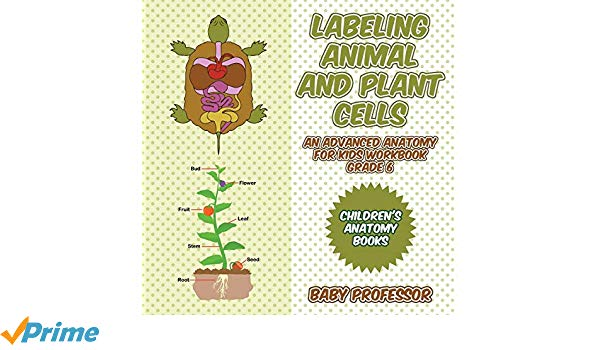 Anatomy clipart kids cells vector black and white Labeling Animal and Plant Cells - An Advanced Anatomy for Kids ... vector black and white
