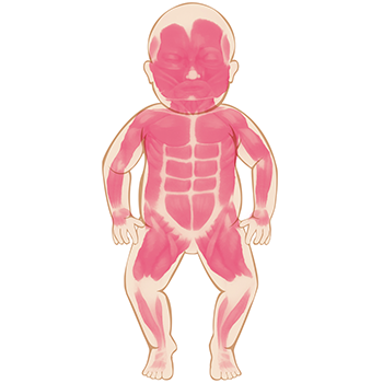 Anatomy clipart kids muscular system graphic Your Baby\'s Muscular and Skeletal Systems - Grow healthy. Grow happy. graphic