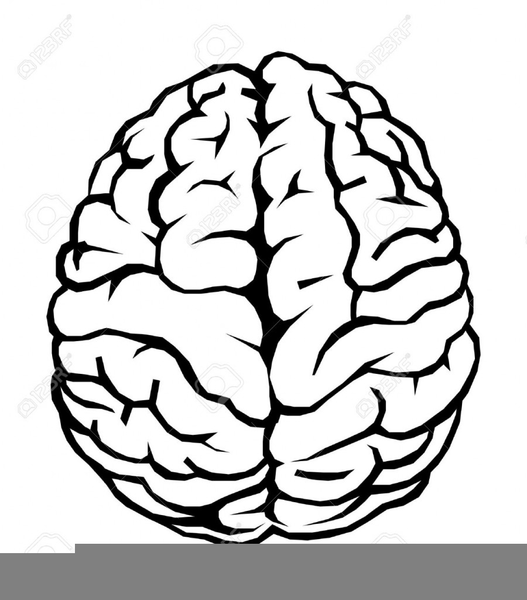 Anatomy of the brain clipart clipart black and white library Human Brain Anatomical Clipart   Free Images at Clker.com - vector ... clipart black and white library