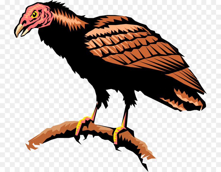 Andean condor clipart svg transparent stock Turkey Cartoon png download - 785*700 - Free Transparent Vulture png ... svg transparent stock