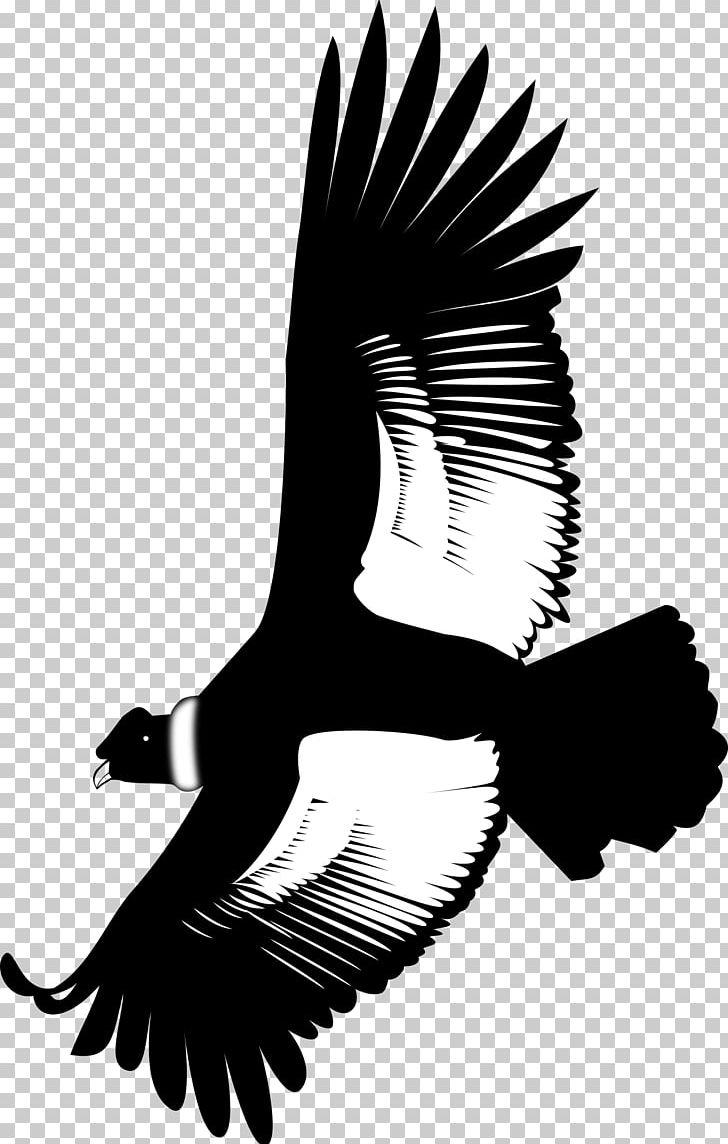 Andean condor clipart graphic transparent stock Andean Condor Eagle California Condor PNG, Clipart, Andean Condor ... graphic transparent stock