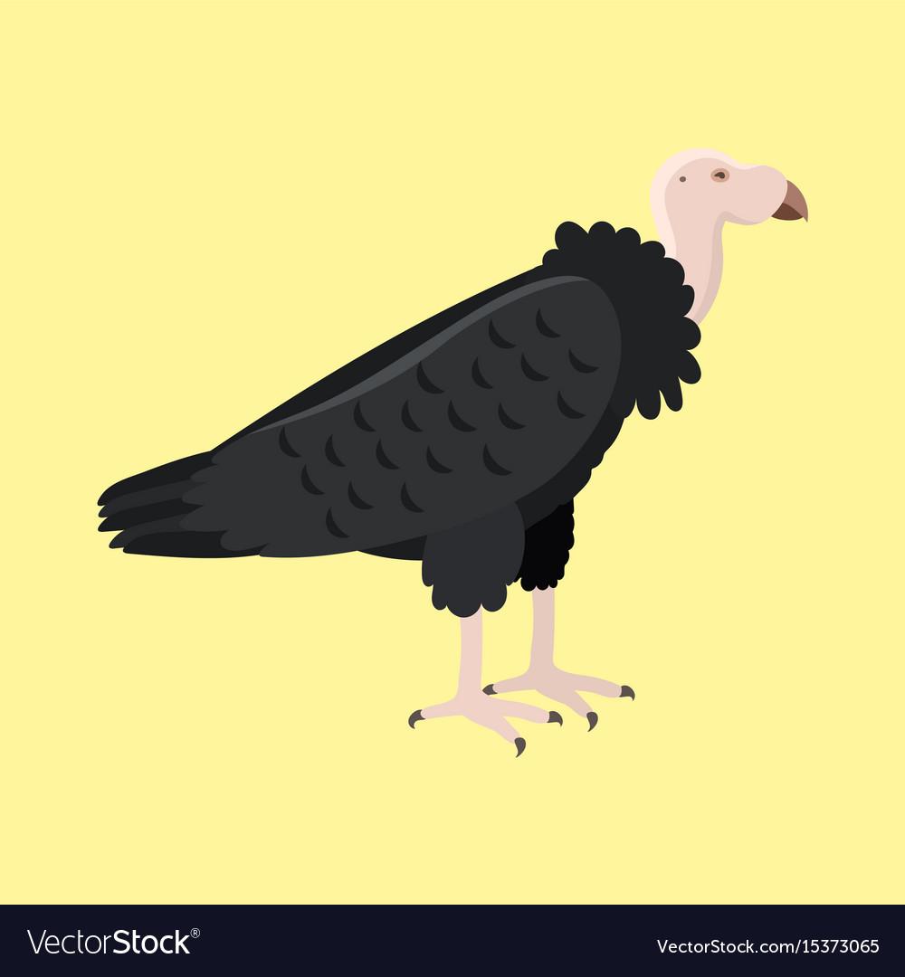 Andean condor sittting clipart