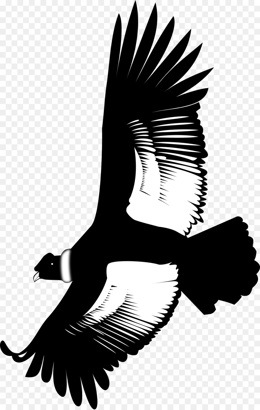 Andean condor sittting clipart picture freeuse download Eagle Bird png download - 1523*2400 - Free Transparent Andean Condor ... picture freeuse download