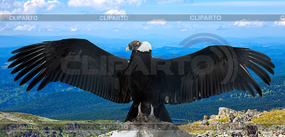 Andean condor sittting clipart clipart royalty free stock Condor   Stock Photos and Vektor EPS Clipart   CLIPARTO clipart royalty free stock