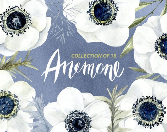 Anemone and rose clipart vector free library Watercolor Flowers Clipart White Anemone Aquarelle Digital Clip Art ... vector free library