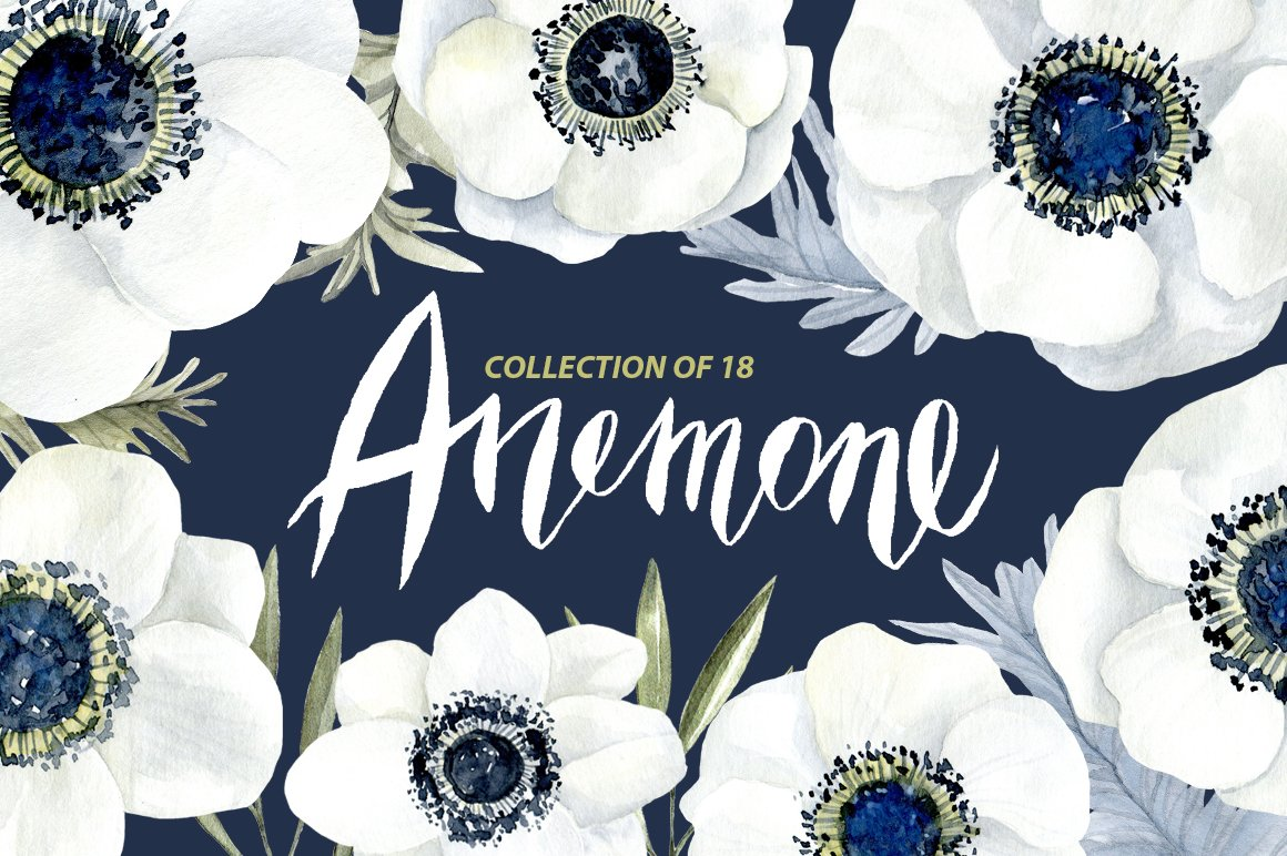 Anemone and rose clipart picture black and white stock Watercolor anemone white flowers picture black and white stock