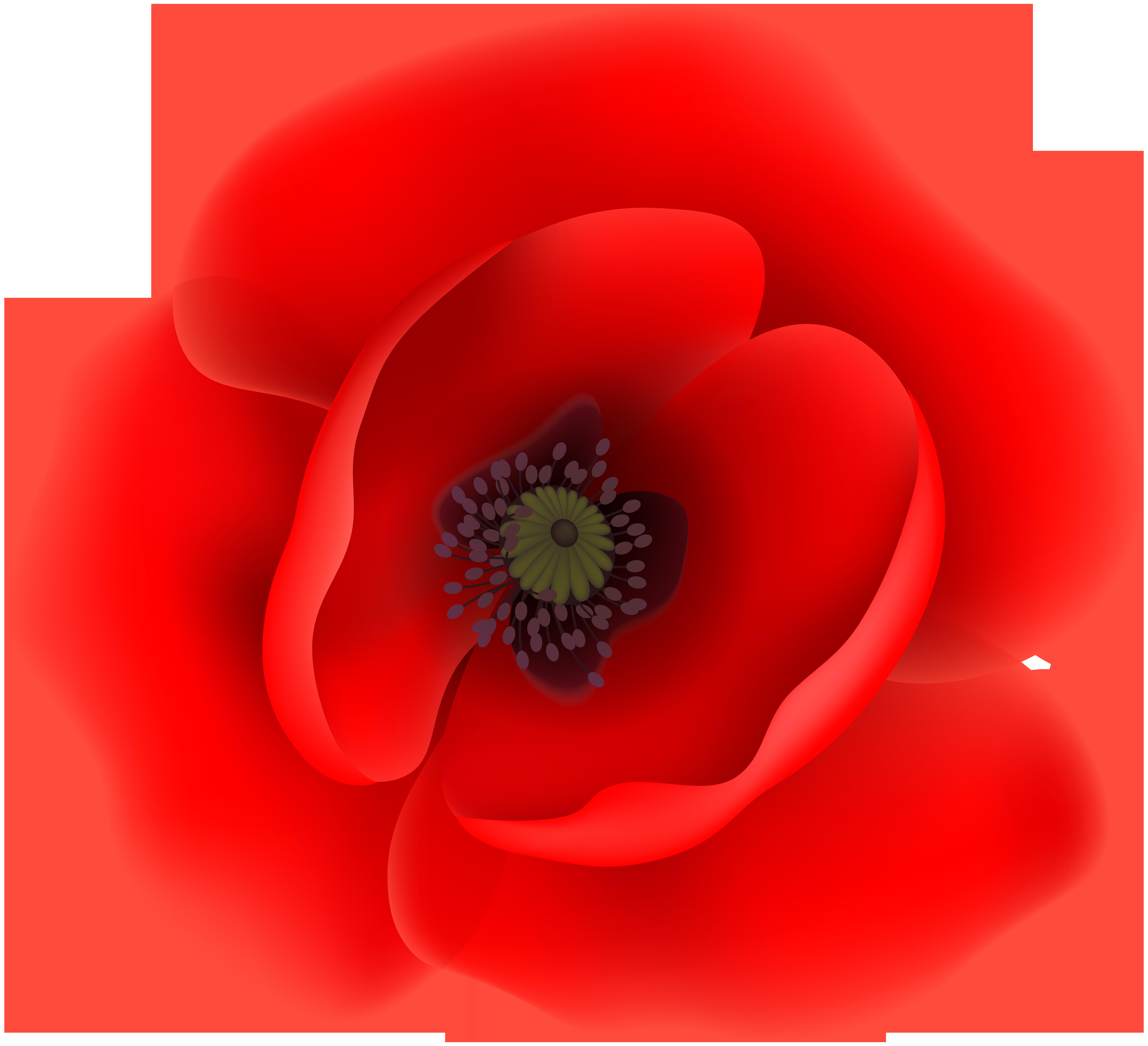 Poppy flower clipart vector transparent stock Poppy Flower Clip Art Transparent Image | Gallery Yopriceville ... vector transparent stock