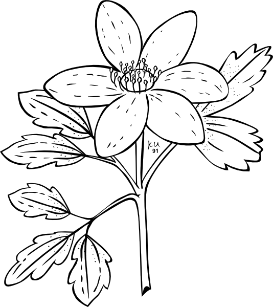 Flower with roots clipart black and white. Anemone clip art at