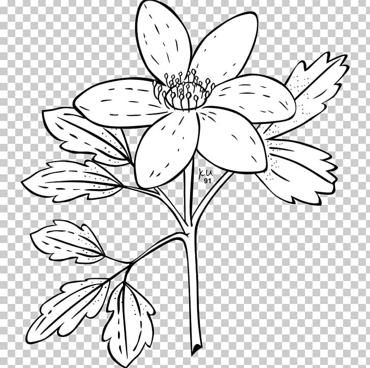 Anemones clipart black and white svg royalty free Anemone Nemorosa Anemone Canadensis Plant Flower PNG, Clipart ... svg royalty free