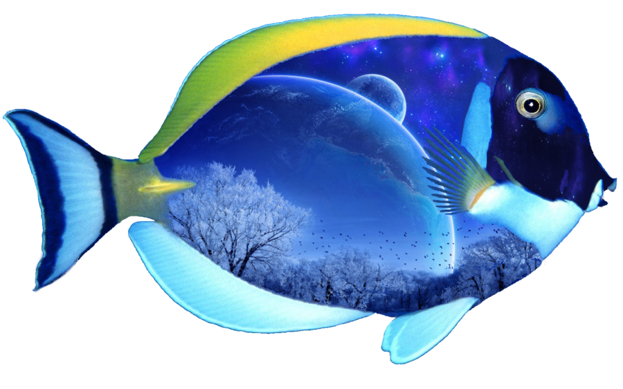 Angel fish clipart transparent stock Fantasy Fish png by mysticmorning on DeviantArt transparent stock