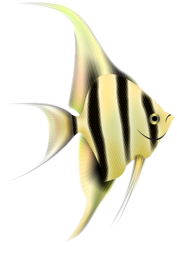 Angel fish clipart freeuse library Angelfish PNG Clipart | PNG Mart freeuse library