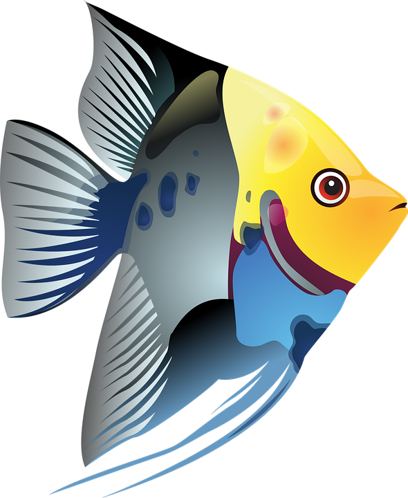 Angel fish clipart black and white image freeuse Angelfish Clipart#4207034 - Shop of Clipart Library image freeuse