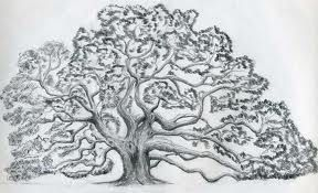Angel oak branch clipart