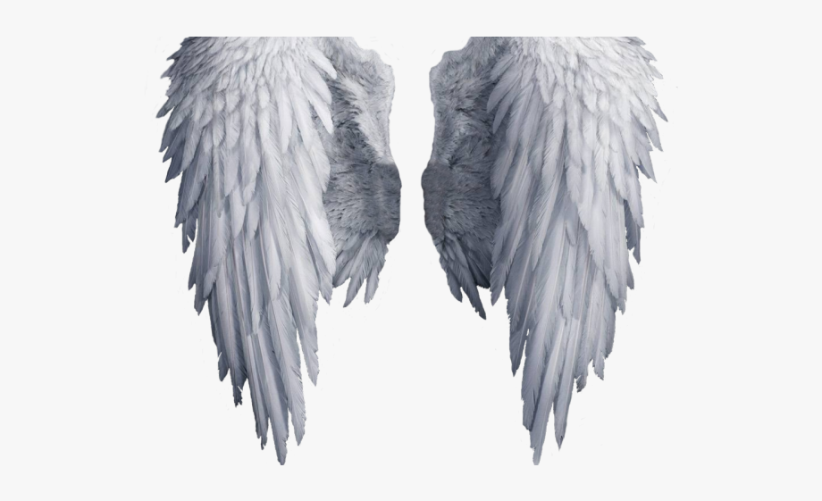 Angels no wings clipart image library Aesthetic Clipart Angel\'s Wing - Transparent Background Angel Wings ... image library