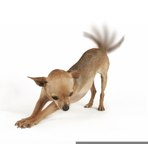 Angry chihuahua clipart image Angry Chihuahua Clipart | Free Images at Clker.com - vector clip art ... image