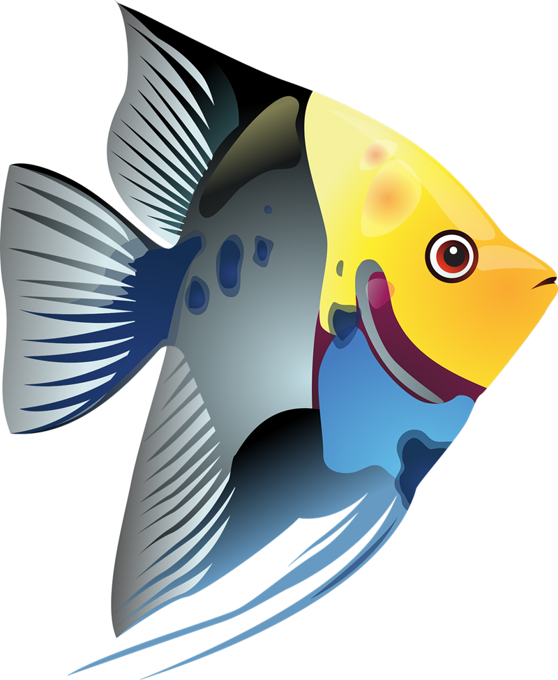 School Of Fish Clipart at GetDrawings.com | Free for personal use ... clip transparent library