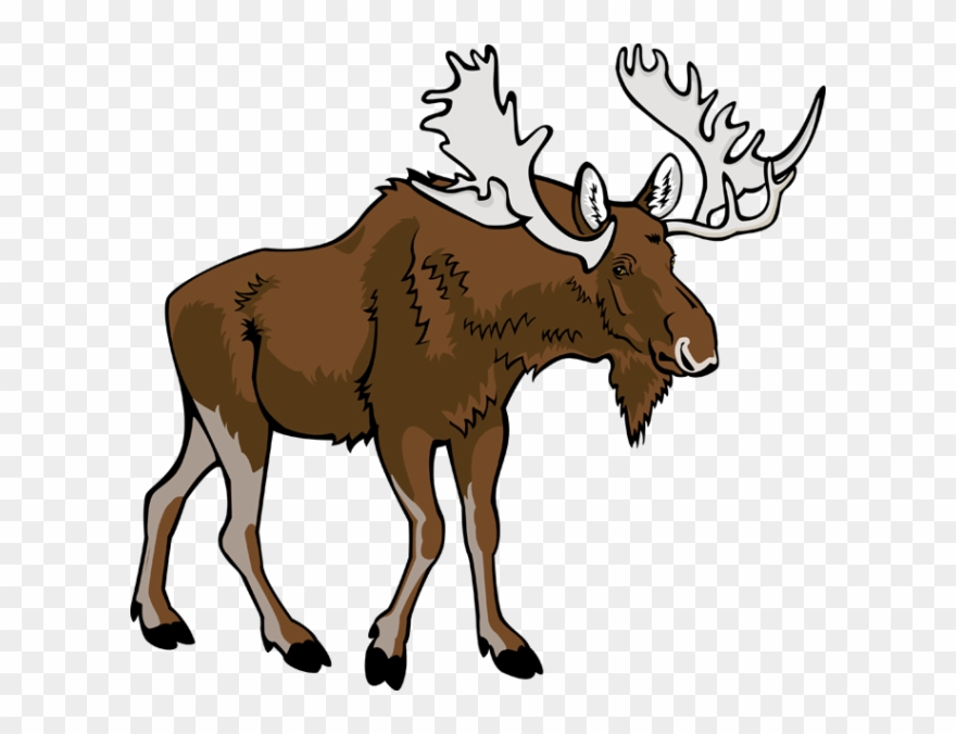 Angry moose clipart clip art stock Moose Clip Art - Moose Clipart Png Transparent Png (#5632) - PinClipart clip art stock