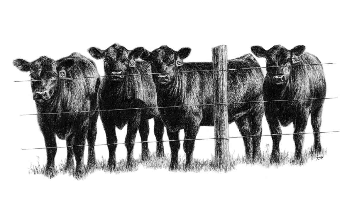Angus cow head clipart png black and white stock Angus Clip Art png black and white stock
