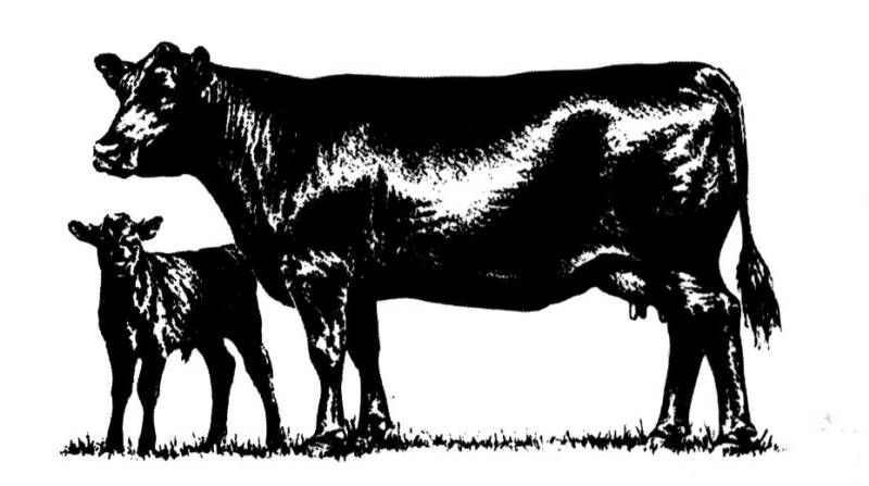Black angus cattle clipart banner library Black Angus Cattle Prices | Create | Cattle farming, Cattle, Cow banner library