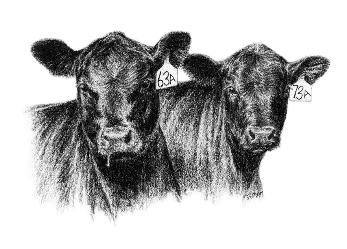 Angus cow clipart banner black and white Angus Clip Art banner black and white