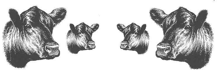 Angus cow head clipart picture freeuse stock Angus Clip Art picture freeuse stock