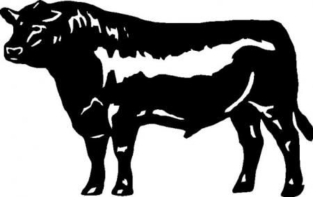 Angus bull head clipart clipart free download black angus bulls - Google Search | breeds-cattle | Steer cow, Cow ... clipart free download