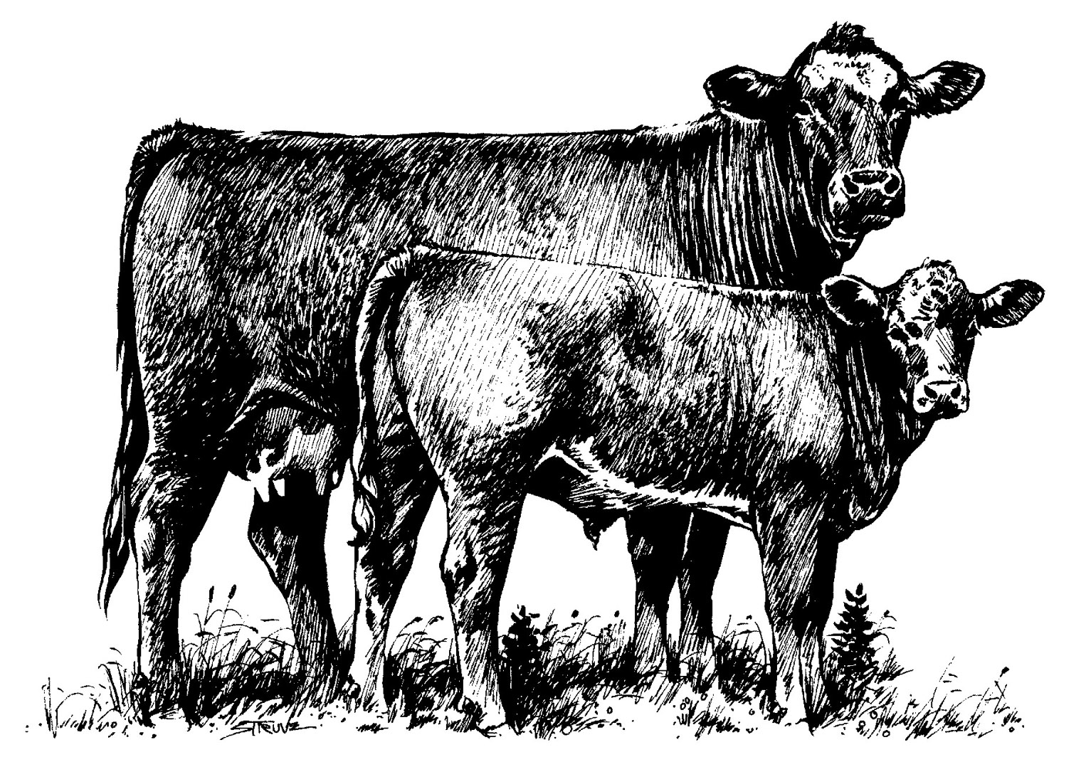 Angus cow and calf clipart clip transparent download Free Calf Cliparts, Download Free Clip Art, Free Clip Art on Clipart ... clip transparent download