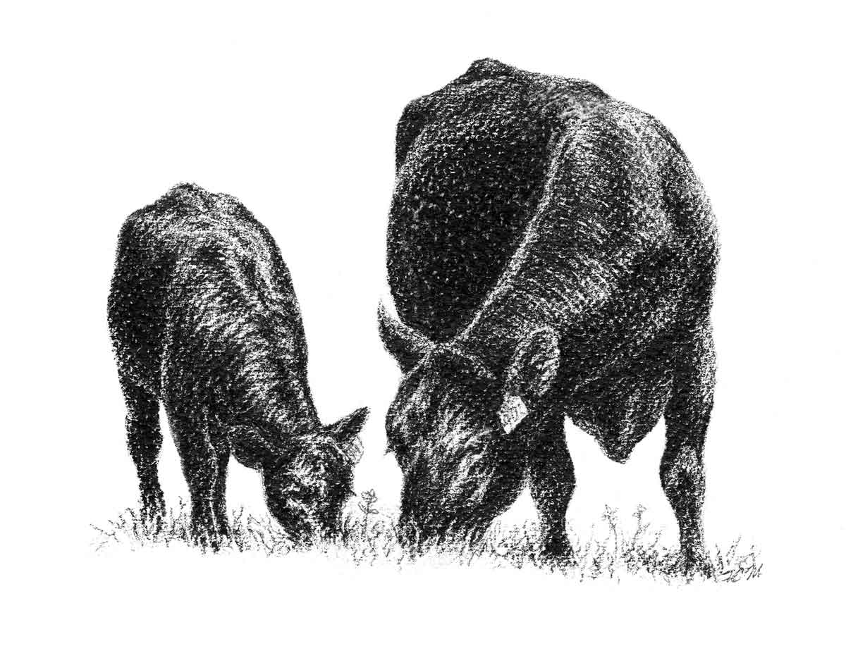 Angus cow and calf clipart free Angus Clip Art free