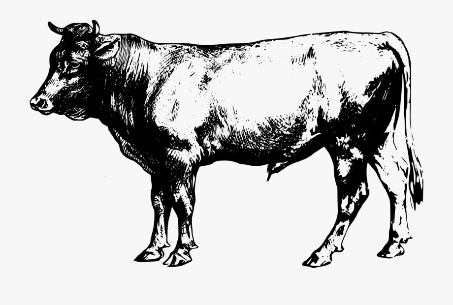 Angus cow clipart png freeuse library Cattle Clipart Angus Cattle - Black Angus Cow Clipart, Cliparts ... png freeuse library