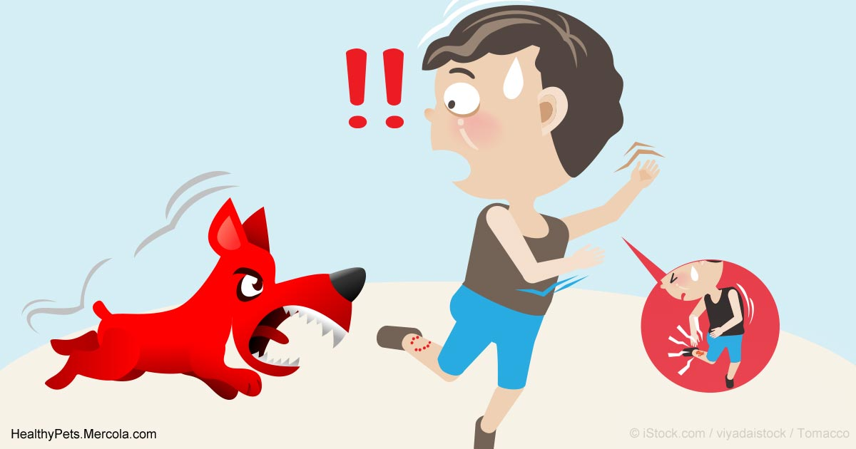 Animal bite clipart