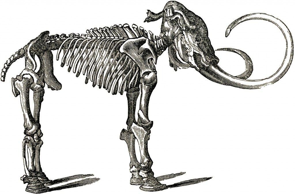 Animal bones clipart free image library stock Free Dinosaur Bones Clip Art! | James\' Paleo Party 7 | Skeleton ... image library stock
