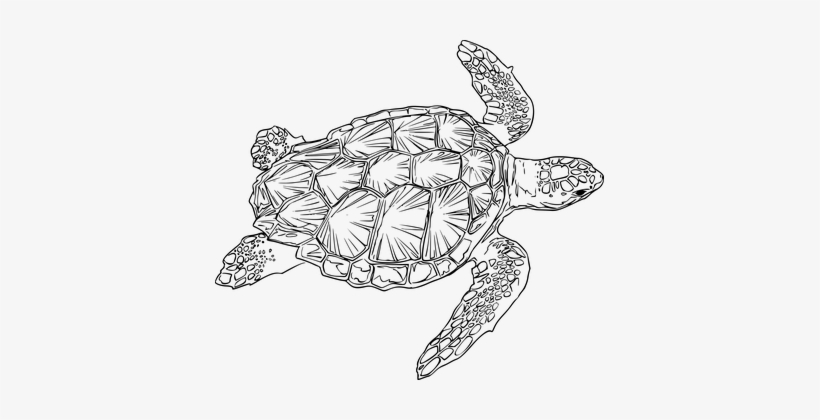 Animal clipart encouraging clip art freeuse Animal Encouraging Marine Nature Ocean Rep - Sea Turtle Black And ... clip art freeuse