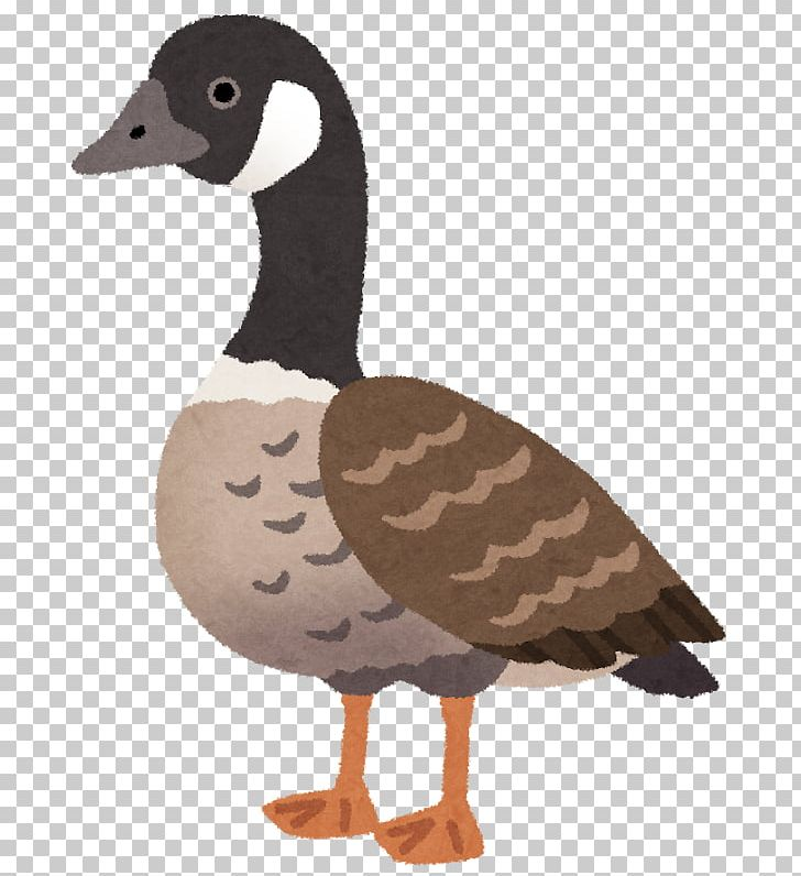 Animal clipart ganso picture black and white stock Cackling Goose Duck Nene Ganso PNG, Clipart, Animals, Beak, Bird ... picture black and white stock