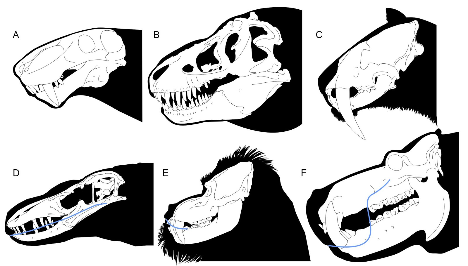 Animal fangs clipart picture black and white Mark Witton.com Blog: Exposed teeth in dinosaurs, sabre-tooths and ... picture black and white