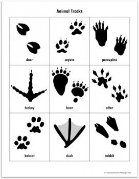 Free animal tracks clipart