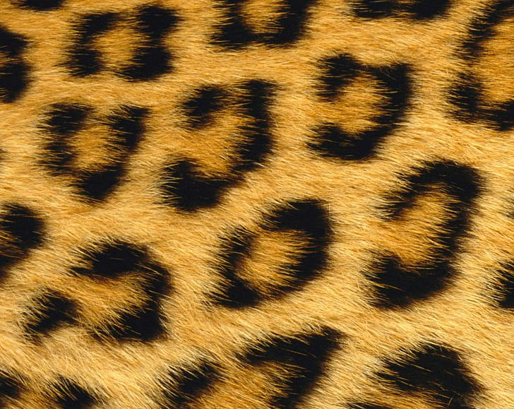 Animal fur clipart picture freeuse stock Giraffe Leopard Skin Animal Fur PNG, Clipart, Animal, Animal Fur ... picture freeuse stock